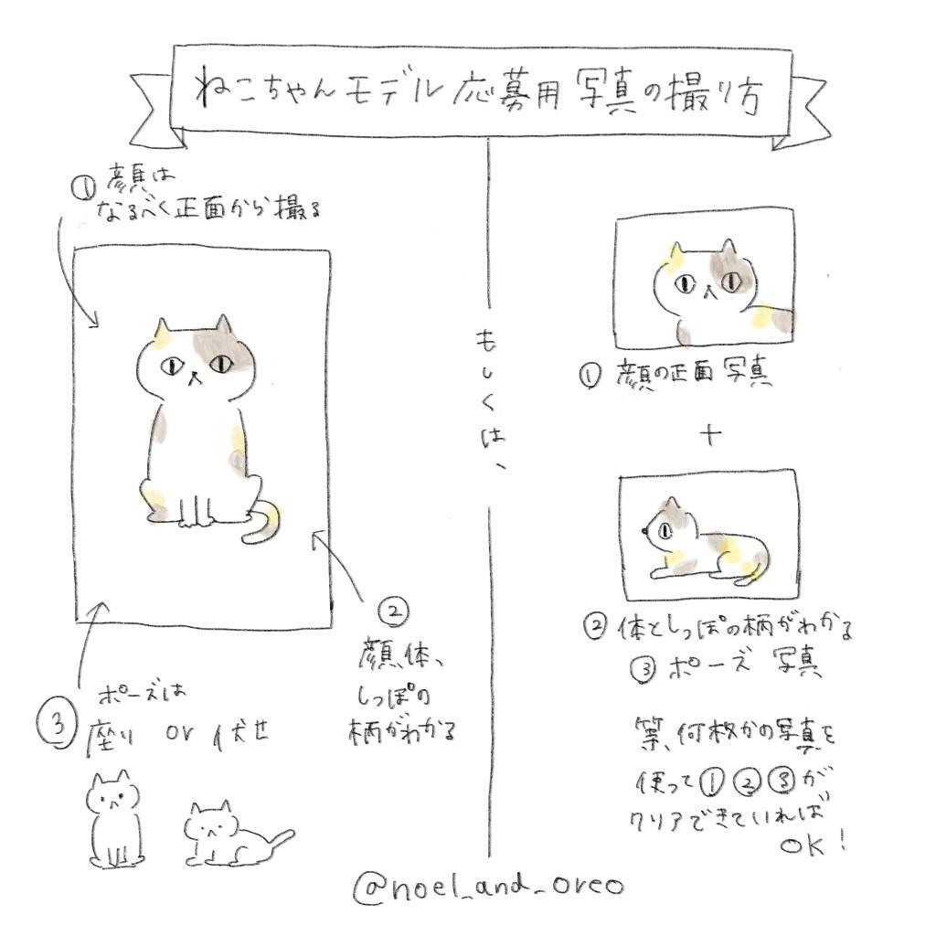 猫モデル募集のおしらせ